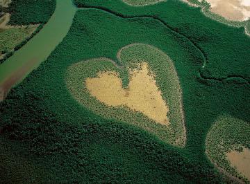 heart-shaped-mangrove-voh-new-caledonia
